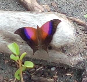 trippy moth
