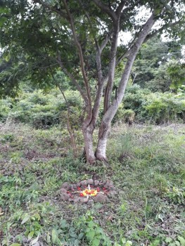 altar in front of carao tree