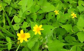 flora amarilla