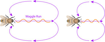 bee waggle run